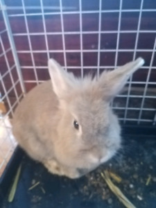 Rescue bunny ready for new home