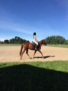 Horse Riding Parties! Kitchener / Waterloo Kitchener Area image 1
