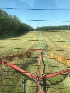 Good quality horse hay for sale