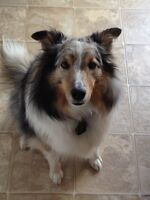 Did you adopt a SHELTIE from PETLAND in 2008?