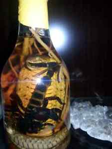 Scorpion - Cobra in bottle