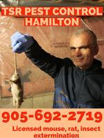 MOUSE? RAT? ROACH? BED BUGS? HAMILTON PEST CONTROL 905-692-2719