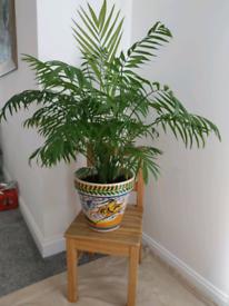 Beautiful plant