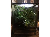 Vivarium full set up with ever thing