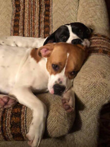 Duke and Daisy are Hoping for a Life Together in Canada!