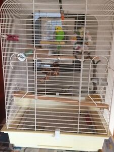 Budgie, with cage
