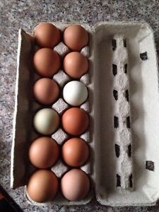 Organic eggs for sale and hatching eggs