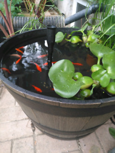 Gorgeous patio/balcony pond with plants and fish