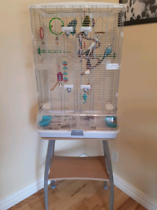 4 BUDGIES WITH VISION CAGE & STAND