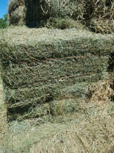 1st cut Alfalfa/ Timothy Hay for sale