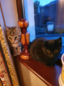4 month old cats kittens