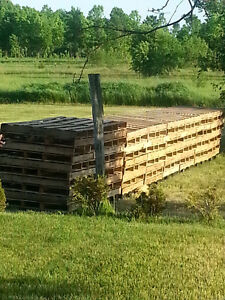 Pallets for sale Plastic or Hardwood Belleville Belleville Area image 1