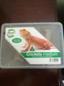 Medium sized Crickets - reptile food
