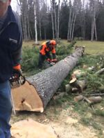 Tree and climbing services