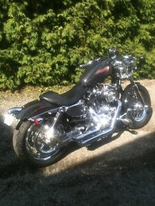 HARLEY  POUR ADULTE