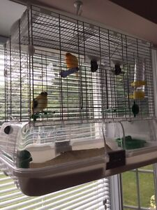 Canaries and VISION cage