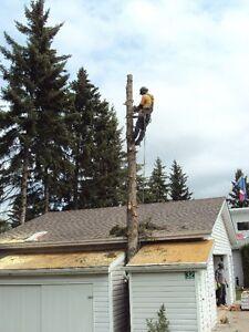TREE SERVICE  REMOVALS & PRUNING (780) 421-8282 Edmonton Edmonton Area image 9