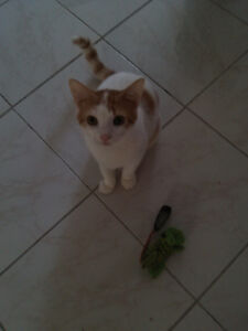 Kitten in need of new home