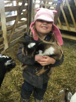Baby Goat Encounters at Jireh Hills Family Homestead