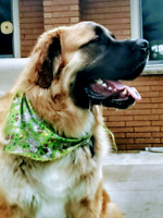 Professional Dog Groomer Wanted
