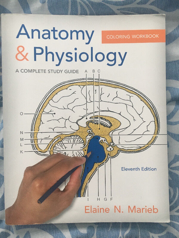 Essentials of Human Anatomy and Physiology, Eleventh Edition ...