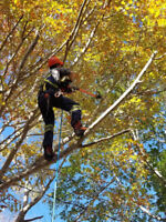 Tree Removal and Tree Pruning for Amherst, NS