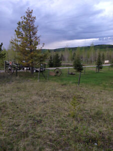 Affordable Horse Board in the Foothills of Priddis