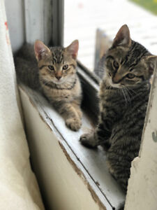 2 Male kittens looking for new home