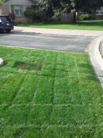 Residential Lawn Mowing. Prices start @ $20/cut