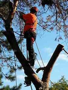 TREE REMOVAL / PRUNING / STUMP GRINDING / OAKVILLE TREE  SERVICE Oakville / Halton Region Toronto (GTA) image 2