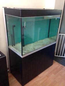 Fluval Profile 72 Gallon Tank With Fish