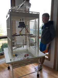 Love Bird With Cage