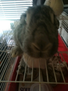 Rescue bunnies need new homes