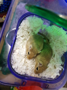 2 gerbils with everything
