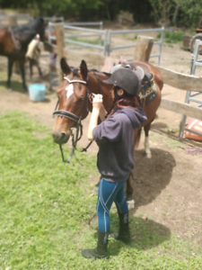 COOL ROADSAFE Well Bred QH...Videos