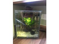 Fluval 19litre fish tank with extras
