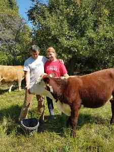 Elite Grass-Fed Beef - 2016 Meat Available! Kingston Kingston Area image 4