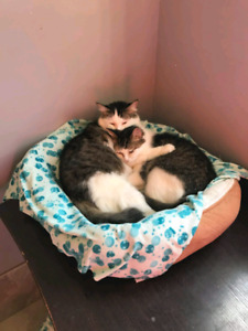 Mom and Daughter rescued   Petsave