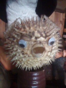 Decorative Puffer fish