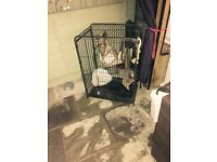 Animal cage FREE