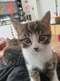 Two lovely kittens. Girls.