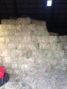 small square bales great for horses