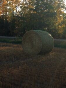 Oat and Pea straw for Sale