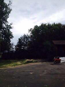 Tree removal Peterborough Peterborough Area image 4