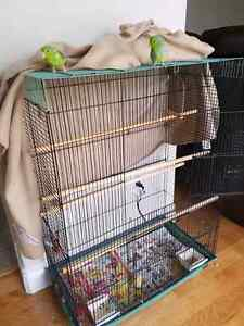 Parrotlets and Cage - 300$
