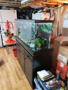 Aquarium sur meuble