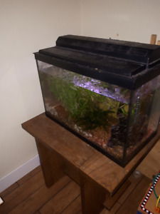 tank, turtle, fish, snails, stand