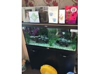 175 litre fish tank