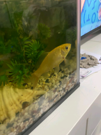 Cold water fish need a new home(free)