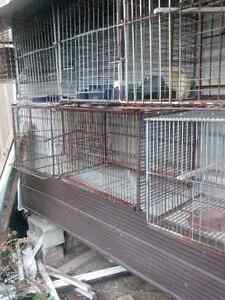 Bird cages available
